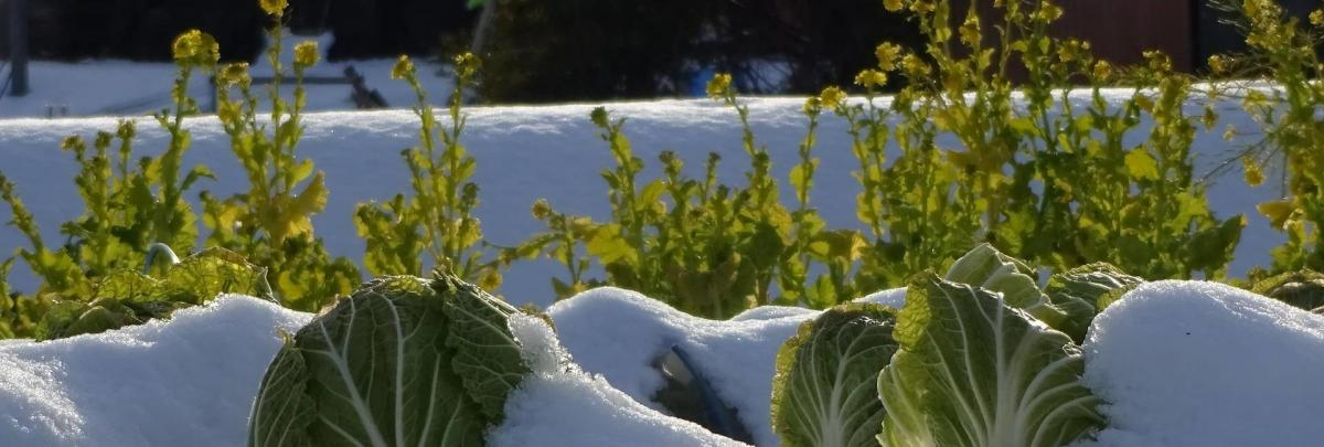 hochbeet-winter