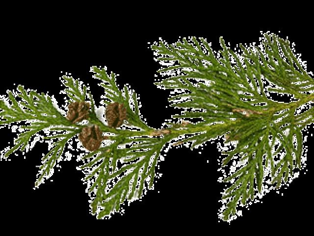 Red Cedar ist ein vielseitiges Holz, dass Sie für Ihre Terrasse, den Garten oder die Sauna für Zuhause nutzen können.