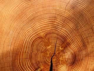 Holzarten